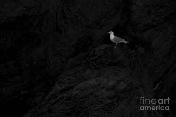 Photograph - Gull In Cave On Gull Island by Dan Friend