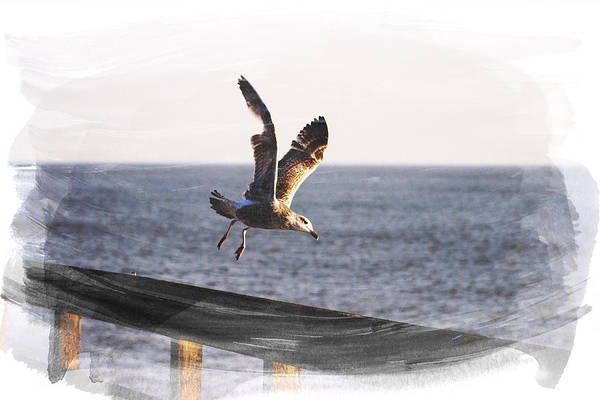 Gull Photograph - Gull In Flight by Martin Newman