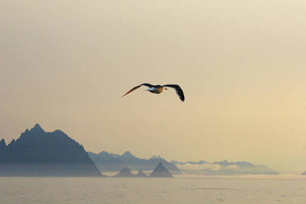 Kamchatka Photograph - Gull In Mid-flight And Eroded Volcanic by John Borthwick