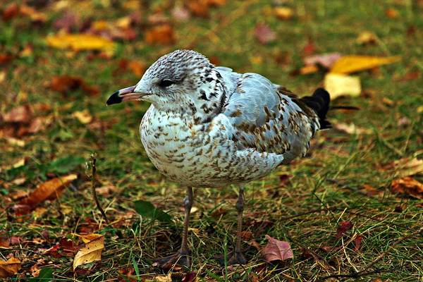 Photograph - Gull by Jp Grace