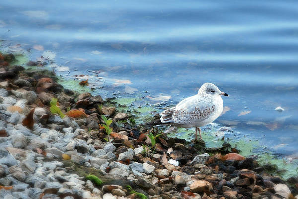 Photograph - Gull by Lora Mercado