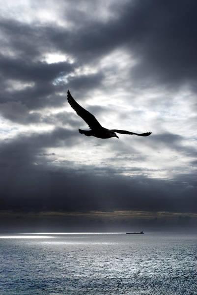 Gull Photograph - Gull by Mark Rogan