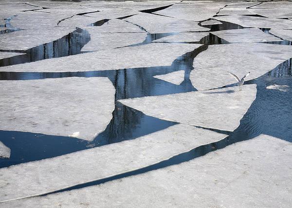 Gull On Ice Art Print