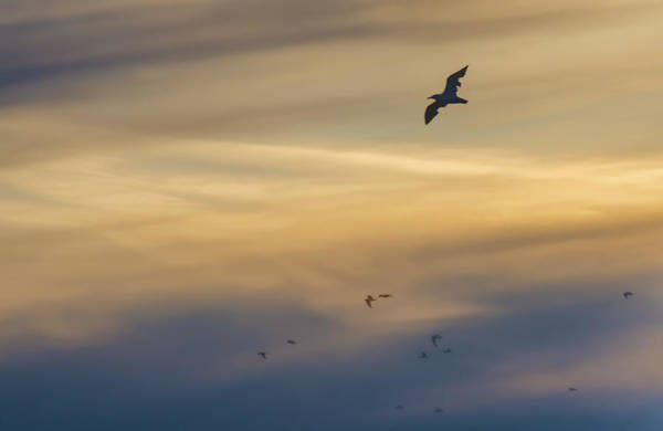 Photograph - Gulls At Sunset by Beth Sawickie