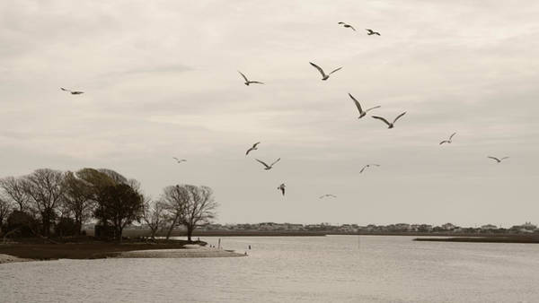 Photograph - Gulls Flying Above The Inlet Sepia by MM Anderson