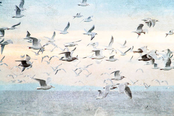 Photograph - Gulls Flying Over The Ocean by Peggy Collins