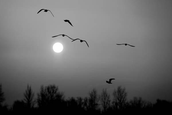 Photograph - Gulls On The Vistula River by Tomasz Dziubinski