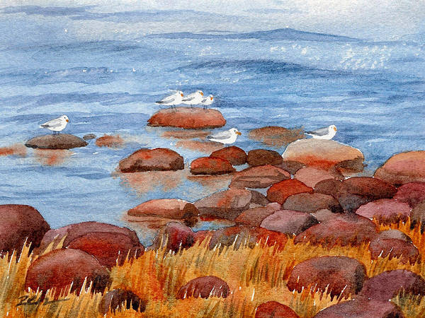 Painting - Gulls On The Maine Coast by Janet Zeh