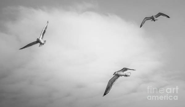 Photograph - Gulls Winter Sky by Michael Arend