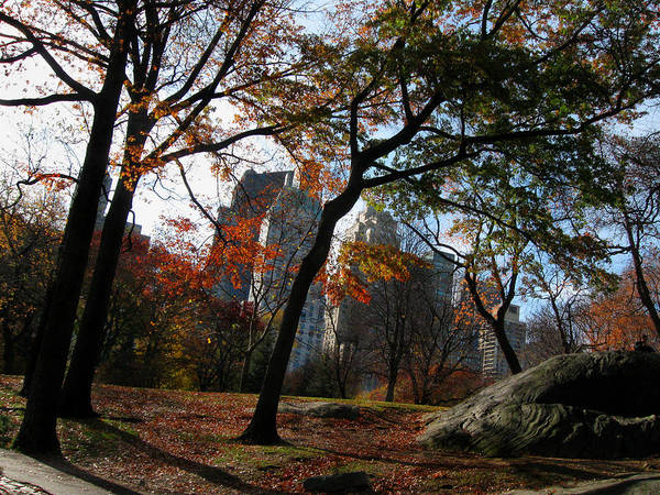 Guy On A Rock In Central Park Art Print