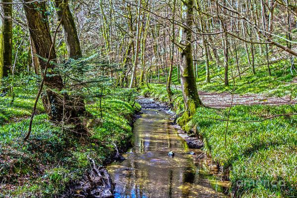 Village Creek Photograph - Gweek Woods by Brian Roscorla