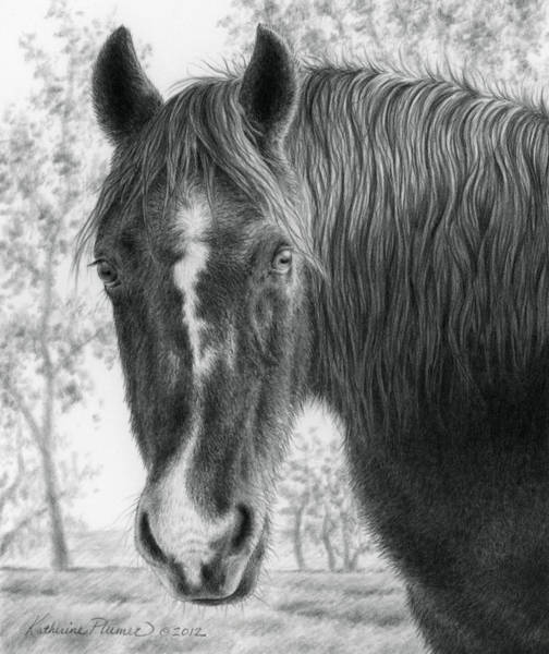 Equine Drawing - Gwen In The Late Fall by Katherine Plumer