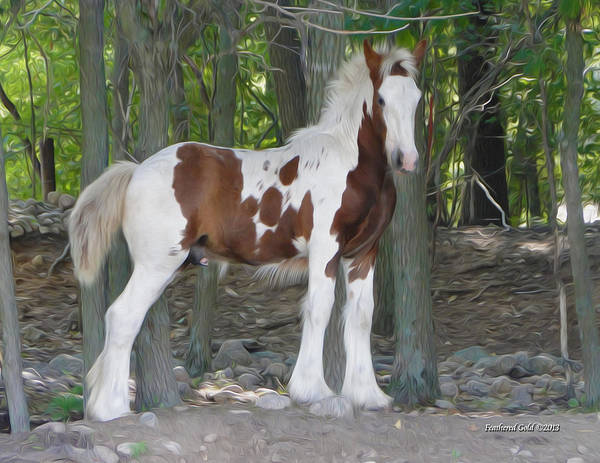 Horse Feathers Digital Art - Gypsy Foal In The Woods by Feathered Gold Stables