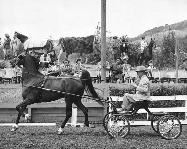 Wall Art - Photograph - Hackney Harness Horse by Underwood Archives