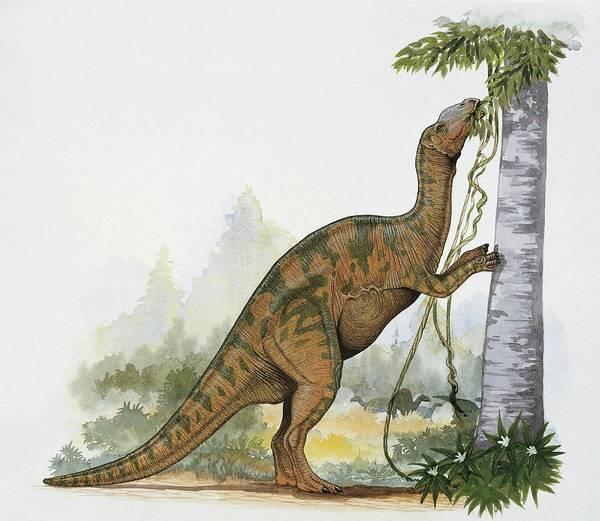 Wall Art - Photograph - Hadrosaurus Dinosaur by Deagostini/uig/science Photo Library