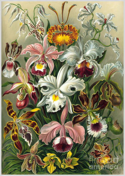 Wall Art - Painting - Orchids Mixed Media Painting by Heinz G Mielke