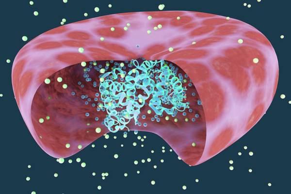 3d Visualization Photograph - Haemoglobin Protein by Ella Maru Studio / Science Photo Library