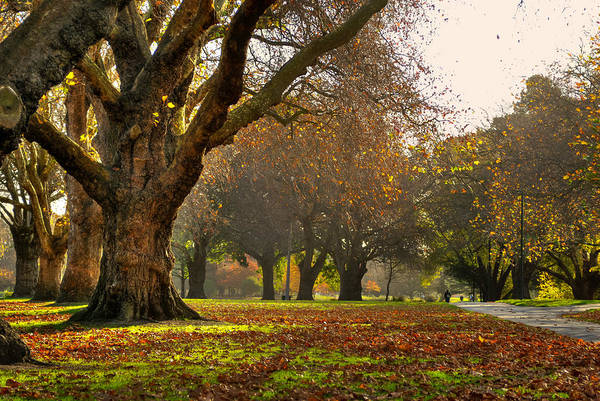 Photograph - Hagley In Autumn by Jenny Setchell