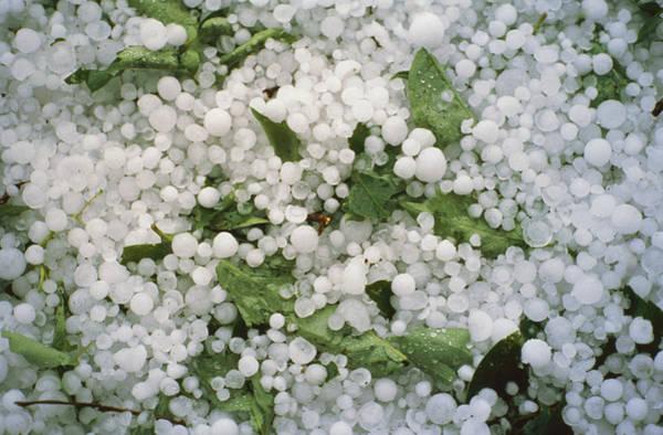 Photograph - Hailstones by Perennou Nuridsany