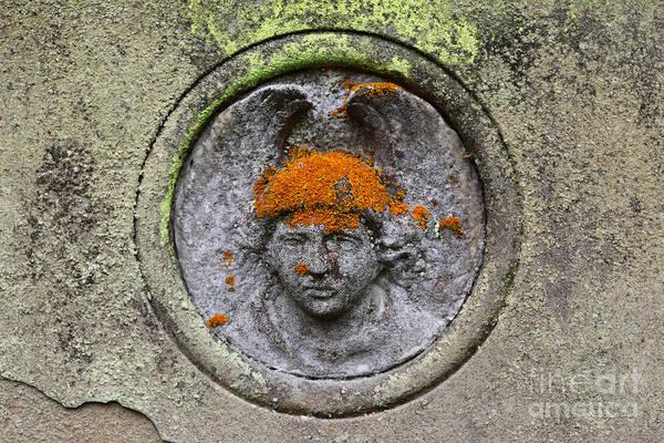 Orange Lichen Photograph - Hair Transplant by James Brunker