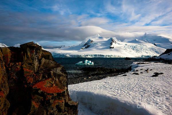 Photograph - Half Moon Island Antarctica by Andy Myatt