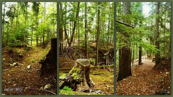 Photograph - Halcyan Forest by Guy Hoffman