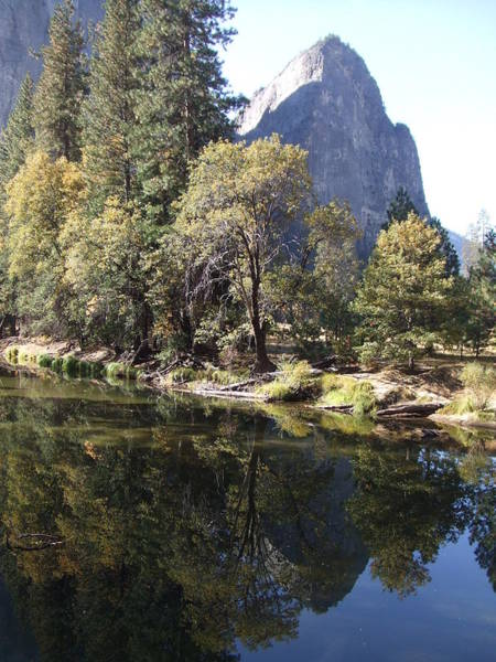 Photograph - Half Dome Reflection by Richard Reeve