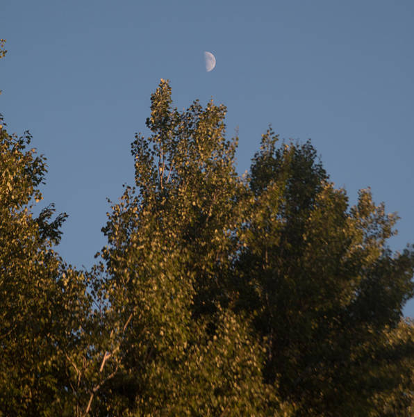 Sturgeon River Photograph - Half Moon by Robert Torkomian