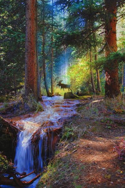 Colorado Wildlife Digital Art - Hall Valley Moose by J Griff Griffin