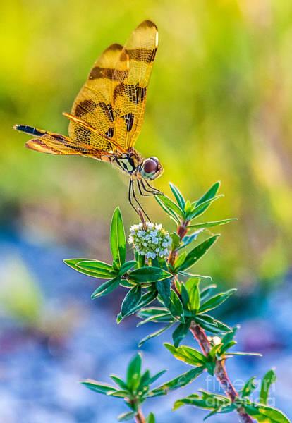 Sawgrass Digital Art - Halloween Banner Dragonfly 0762 by Shawn Lyte