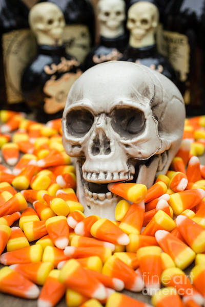 Photograph - Halloween Candy Corn by Edward Fielding
