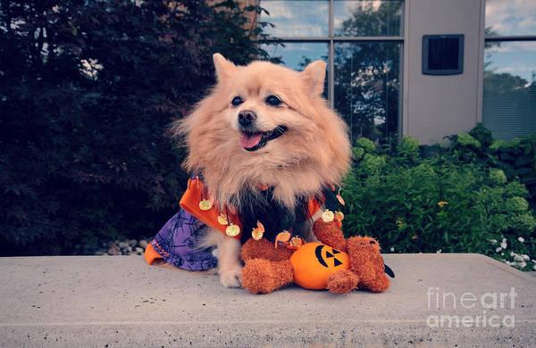 Wall Art - Photograph - Halloween Dog by Charline Xia