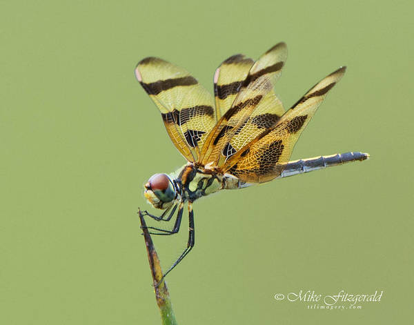 Photograph - Halloween Pennant by Mike Fitzgerald