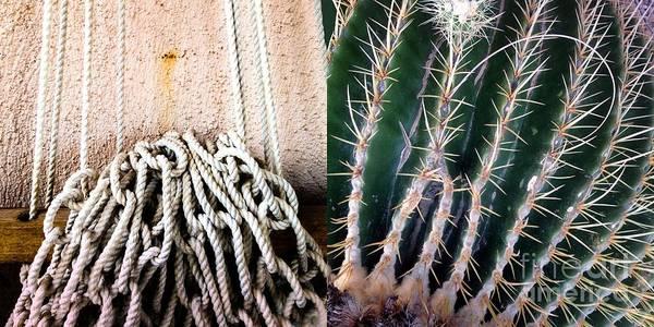 Photograph - Hammock Cactus by Marlene Burns