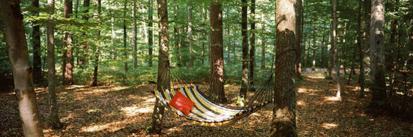 Peacefulness Photograph - Hammock In A Forest, Baden-wurttemberg by Panoramic Images