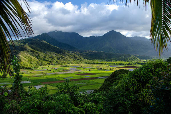 Photograph - Hanalei Valley by Michael Ash