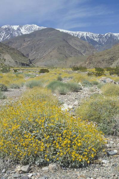 Photograph - Hanaupah Canyon Wildflowers by Dan Suzio