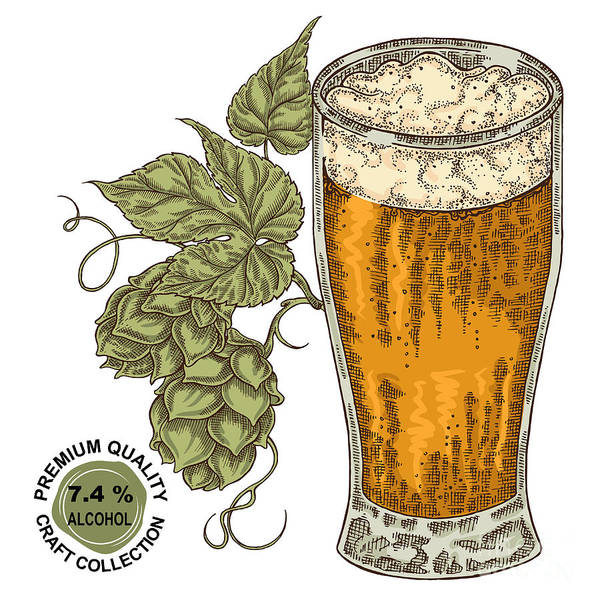 Wheat Wall Art - Digital Art - Hand Drawn Beer Glass With Hops Plant by Jka