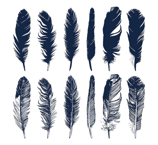 Beauty Of Nature Digital Art - Hand Drawn Feathers Set On White by Mart m
