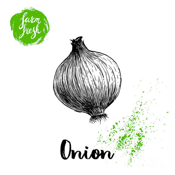 Engraved Digital Art - Hand Drawn Sketch Onion. Farm Fresh by Sketch Master