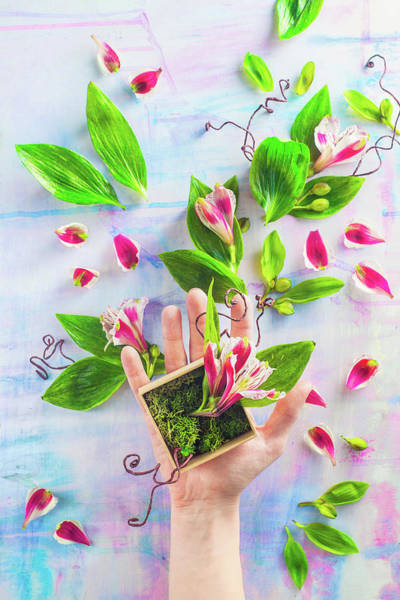 Wall Art - Photograph - Hand Full Of Spring by Dina Belenko