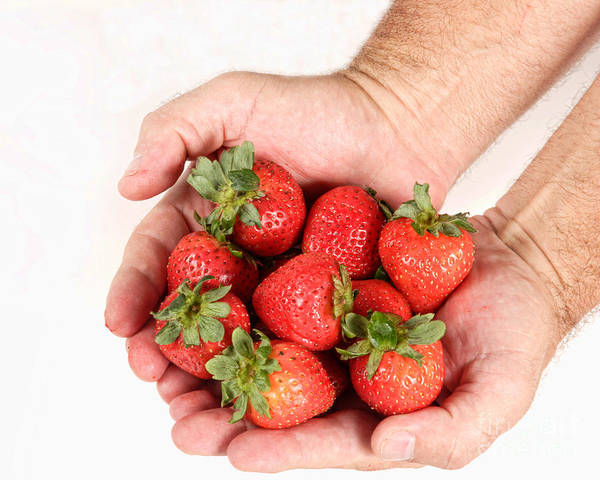 Photograph - Handful Of Strawberries 2 by James BO Insogna