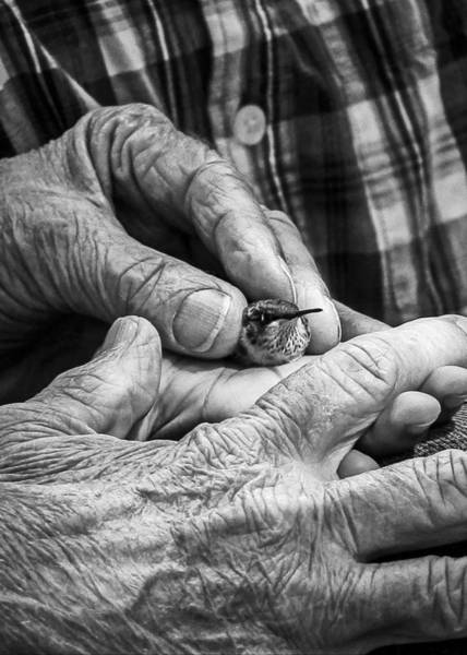 Elderly Wall Art - Photograph - Hands Holding A Hummingbird by Jon Woodhams