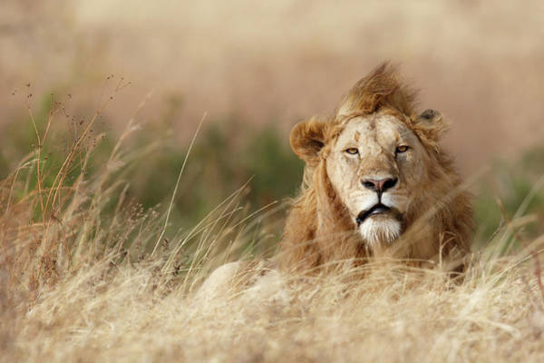 Wild Grass Photograph - Handsome! by Ali Khataw