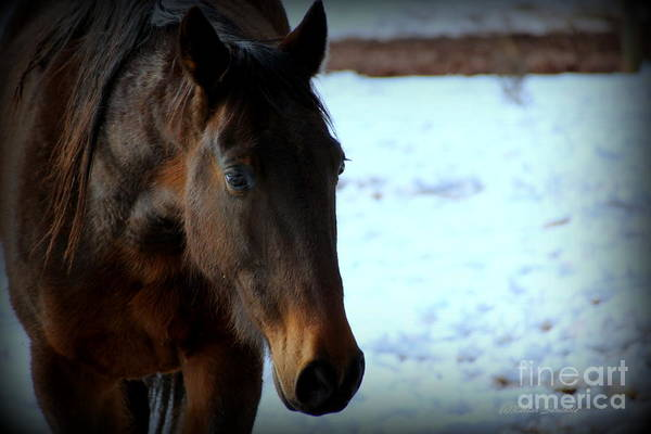Photograph - Handsome Harry Trotter by Rabiah Seminole