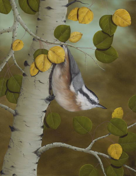 Card Painting - Hanging Around-red Breasted Nuthatch by Rick Bainbridge