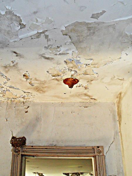 Empty Nest Wall Art - Photograph - Hanging By A Moment by Cyryn Fyrcyd
