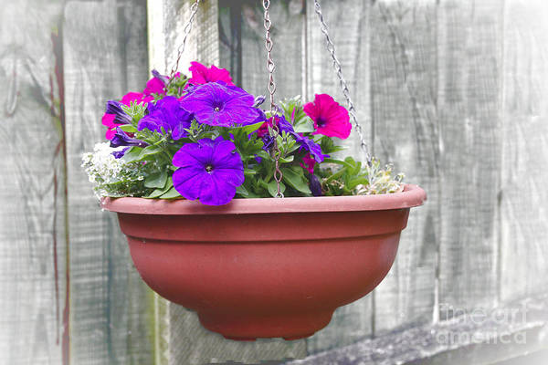 Photograph - Hanging Flower Pot by Jeremy Hayden