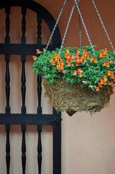 Hanging Flowers And Black Gate Art Print