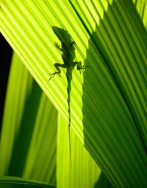 Green Anole Photograph - Hanging In The Tropics by David Lee Thompson